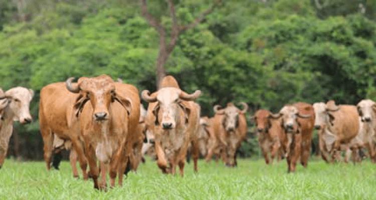 Gujarat Government Cow Scheme