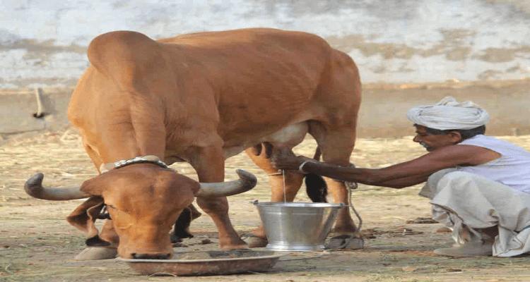 Free Cow Scheme For Gujarat